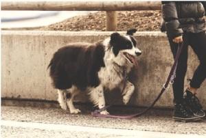 walkdog2