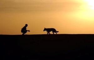 walkdog3